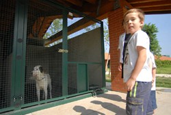 un parco per cani e gatti abbandonati a milano